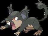Rattata-alola