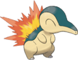 [Image: cyndaquil.png]